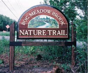 Bog-Meadow